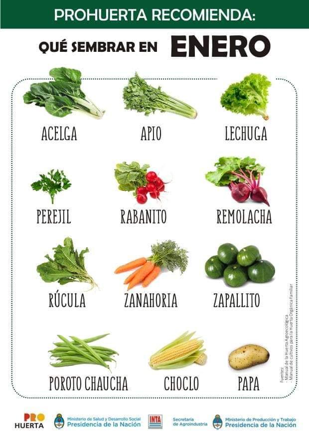 Que sembrar en enero en Argentina