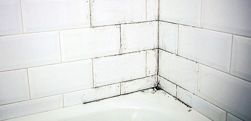 Moho en la ducha